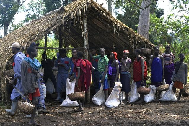 کارگران مزرعه قهوه اتیوپی