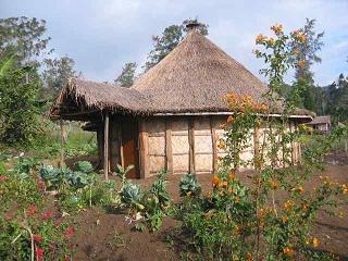 قهوه اندونزی جزیره پاپوآ