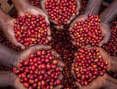 قهوه اسپشیالیتی کنیا AAA