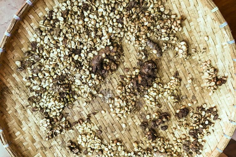 قهوه مدفوع  گربه کوپی لوواک