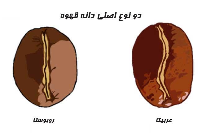 مقایسه کافئین عربیکا و روبوستا