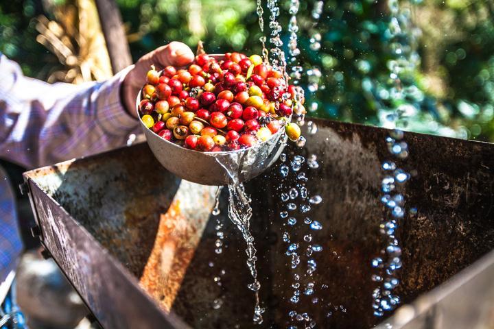 گیلاس قهوه عربیکا نیکاراگوئه